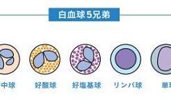 白血球の種類